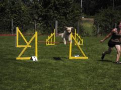 19-07-14-hse-agilityseminar-steffi-und-amy-04-linda.png