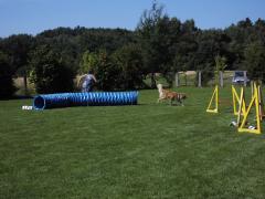19-07-14-hse-agilityseminar-tanja-und-joy-10-linda.png