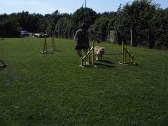 17-05-15-hse-agilityseminar-tanja-und-joy.62-linda.png