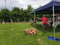 Seminar_Frisbee_2017_07_08_19.png