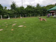 Seminar_Frisbee_2017_07_08_20.png