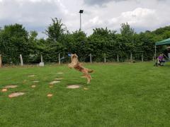 Seminar_Frisbee_2017_07_08_21.png