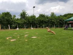 Seminar_Frisbee_2017_07_08_22.png