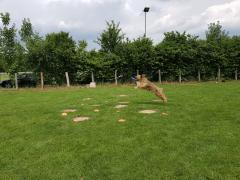 Seminar_Frisbee_2017_07_08_23.png