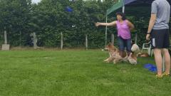 Seminar_Frisbee_2017_07_08_36.png
